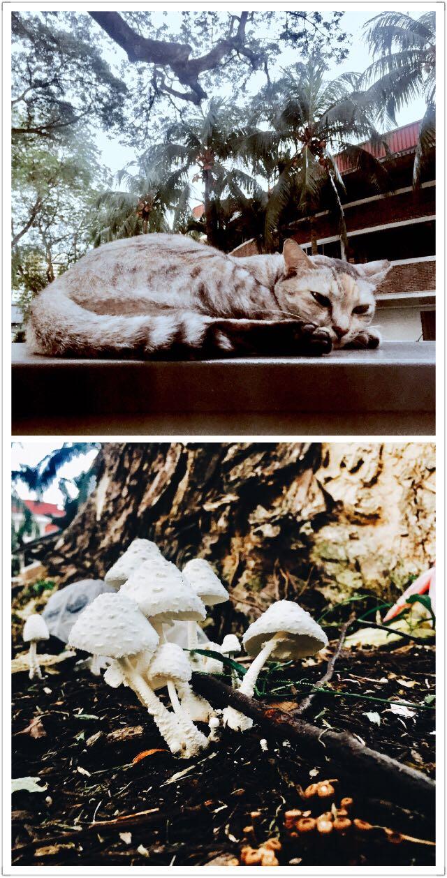 Through the looking glass。下过雨的午后,有慵懒的小猫和默默竖起的蘑菇群。只要你愿意放慢步伐,在忙碌的城市中也可以从平常稀松里发现梦游仙境般的奇幻场景…… 一切缓慢,宁静和从容。